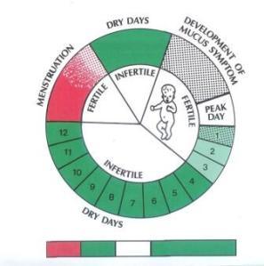 Fertility Cycle Wheel
